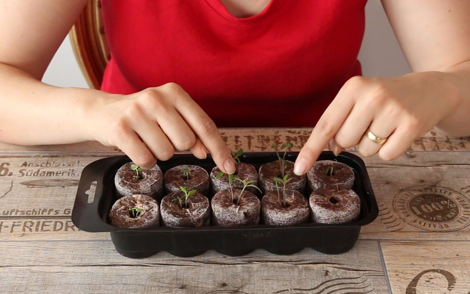 s the easiest ways to grow a bumper crop of tomatoes, Plant them in a growing kit