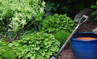 s see how 30 clever gardeners make their hostas thrive