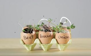 seedlings in egg shells diy video
