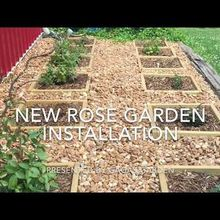 installing a new rose garden, New Rose Garden Installation of BareRoot Rose
