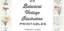 25 free vintage botanical illustration printables