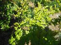 q plant id