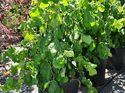 q garden pests