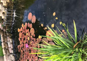 q i have a large koi pond 20 x6 trying to decorate around it