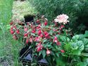 q my annuals are still in flats and are waterlogged from all this rain