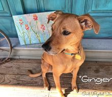 easy diy art crafts project with your pet