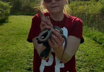 q do you know of any diy snake repellant