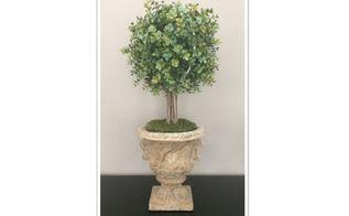 topiary in urn