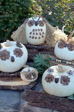 no carve owl pumpkins