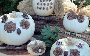 no carve owl pumpkins