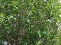 q identify small tree