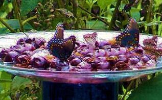 making butterfly feeders