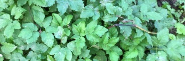 q what in god s name is this weed and how do i get rid of it