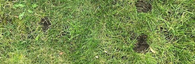 q what do you think are causing these divots all over my lawn