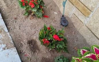 q how do i keep my cats from using my flower beds as litter boxes