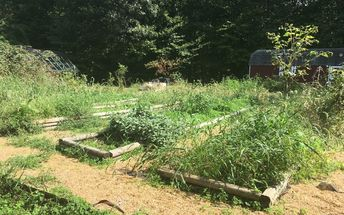 q inherited someone s garden what now