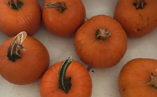 easy velvety foam pumpkins with a real twist, Give them all a bath