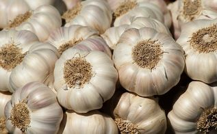 grow a year s worth of garlic at home