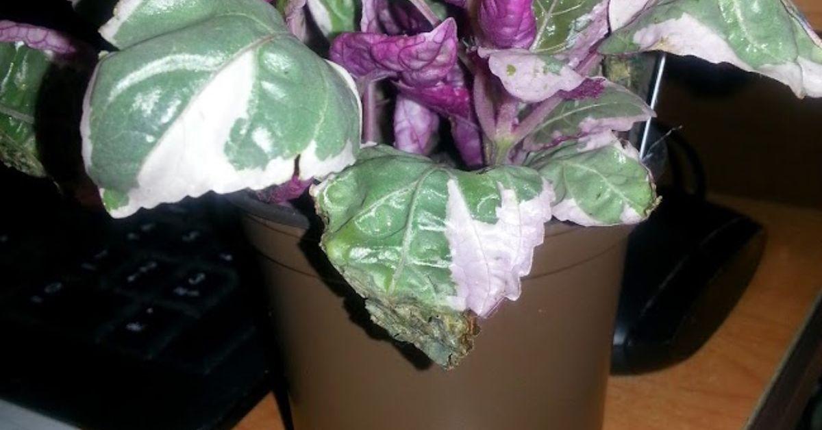 New Plants New Questions Hometalk
