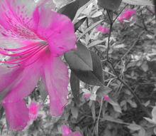 i, flowers, gardening