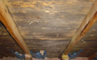 attic mold and mildew why is there mold in my attic, cleaning tips, home maintenance repairs, how to, hvac, Attic mold is a sure sign of excessive moisture in the home