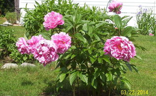 almost summer, flowers, gardening
