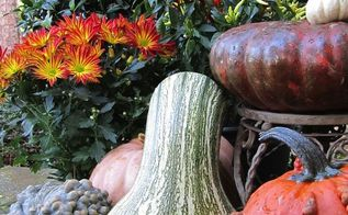 tgif thank god it s fall y all, container gardening, flowers, gardening, seasonal holiday d cor, Knobby pumpkins and gourds