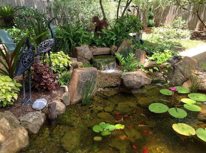 Charming backyard water garden in richmond tx features a for Garden pond questions
