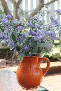 say yes to caryopteris, flowers, gardening