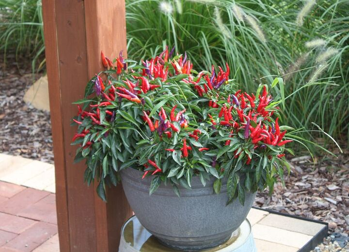 Low maintenance gardening you are never too old or young for Low maintenance deck plants