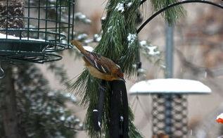 urban garden winterizing update part one, gardening, pets animals, seasonal holiday d cor, urban living, wreaths