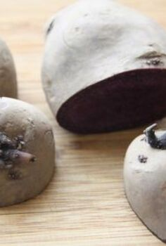 how to prepare seed potatoes for planting, gardening, homesteading, Cutting the Seed Potatoes