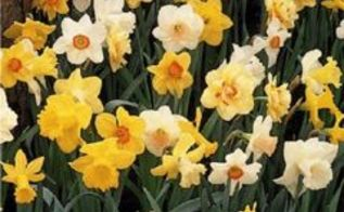 think spring pointers for bulb planting season, gardening, Naturalizing mixtures are a great way to save on bulbs Photo via John Scheepers