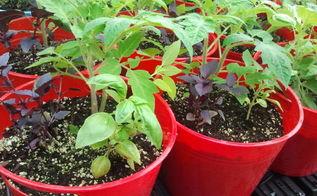 dollar store container gardening, container gardening, gardening