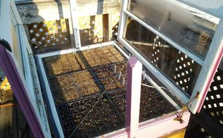 my mini greenhouse that my husband built me out of old windows, diy, gardening, go green, repurposing upcycling