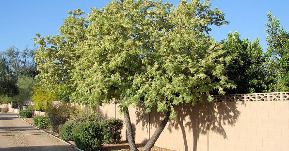 What Types Of Plants And Trees Grow Well In Arizona In