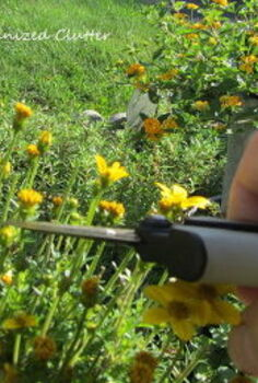 deadheading the beauty bane of flower gardening, flowers, gardening, You can prune with a plant snips or shear like this one A Fiskars
