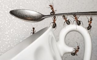 fight ants trade secrets, pest control