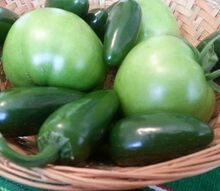 how do you prepare for the next season when your crops are finished, gardening, Beefsteak tomatoes and jalapeno peppers