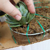 how to create a succulent monogram wreath, flowers, gardening, succulents, Stick the root of the succulent down into the soil mixture beneath the top layer of peat moss