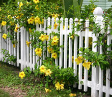 adding a fence to my garden, fences, gardening