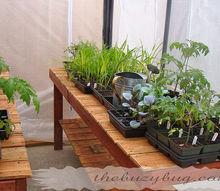 recycled wood fence turned into a beautiful greenhouse bench, gardening, repurposing upcycling, Greenhouse bench with baby plants
