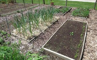 establishing your vegetable garden, gardening, When establishing your first garden start small