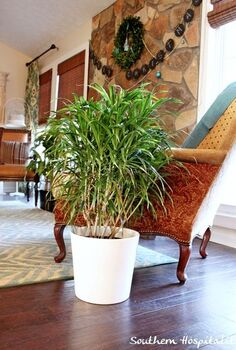 adding plants for the new year, gardening, home decor