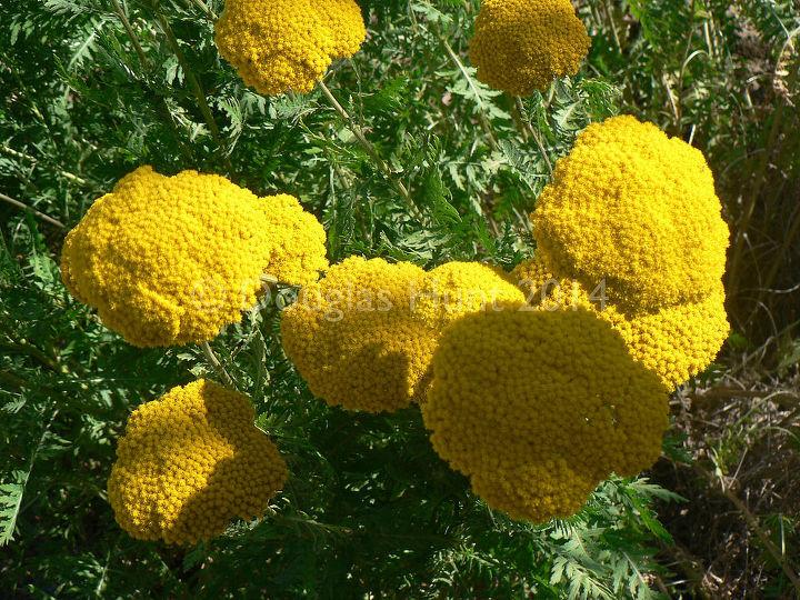 Five Easy Care Perennials That Sip Water Hometalk