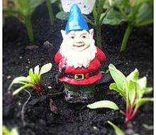 anybody know where we can find a little female gnome, gardening, outdoor living, Gnomey needs a lady friend