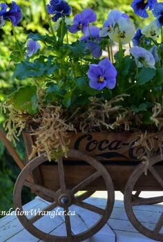 market treasures, container gardening, gardening, Classic Coca cola wagon planted with pansies and moss