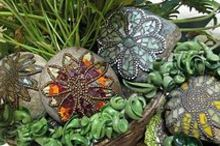 sue s rock star mosaic rocks, crafts, gardening, repurposing upcycling, Rock stars