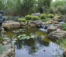 pond and waterfall in suburban chicago, gardening, outdoor living, ponds water features, An ecosystem pond has koi and other critters