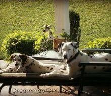 dog leash holder, crafts, pallet, Boone and Dozer